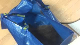 イケアの袋で遊ぶ直次郎とこむぎ。