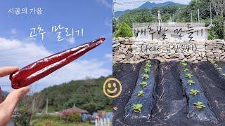 텃밭 Lv.2-1 | 농사 초보 첫 고추 수확했어요! …