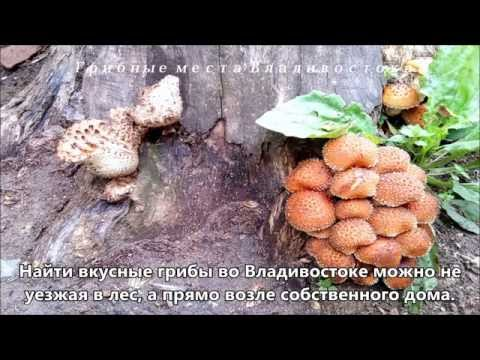 владивосток где познакомиться с местным олигархом