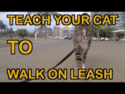 HOW TO TEACH A CAT TO WALK ON LEASH - TUTORIAL