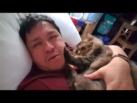 Hugging both Norwegian cat and Egyptian Mau now I can compare who is affectionate cat
