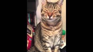 Cat cry because of onion