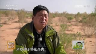 20161211 绿色时空  能人有妙招 治沙又淘宝