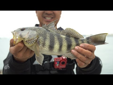 Rigging a Weighted Circle Hook Ballyhoo from YouTube · Duration:  4 minutes 40 seconds