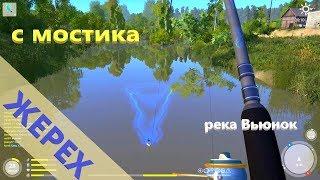 Російська рибалка 4 - річка Берізка - Жерех біля містка