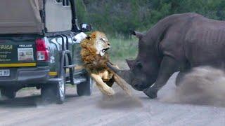 15 Animals That Defeat Natures Scariest Animals