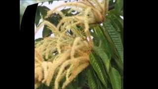 中学受験に必要な植物の名前を覚えるための動画です。5秒間植物の写真...