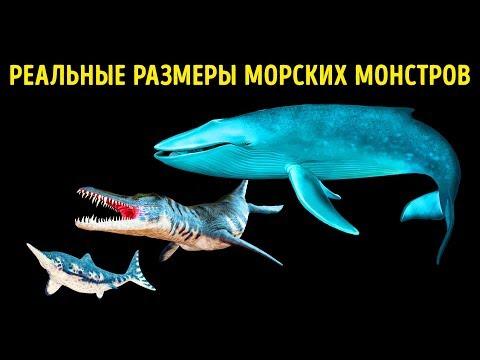 Почувствуйте себя малышом рядом с этими невероятными морскими созданиями