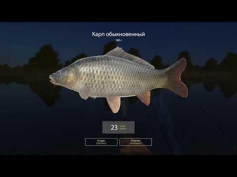 Русская рыбалка 4 - река Белая - Карп обыкновенный