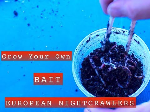 Grow Your Own Fishing Bait. European Nightcrawlers, Simple Cost Effective Vermiculture