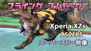 2017年8月26日 愛犬のでんすけ君がドッグプールへ飛び込むシーンをスーパースローモードで撮影してきました。 映像はSONYのスマートフォン(Xperia...