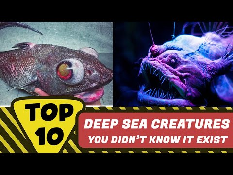 Top 10 MOST Creepy Deep Sea Creatures 2020