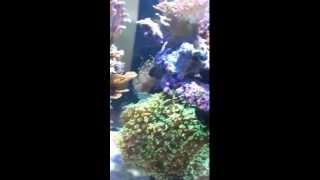 Atoll aquarium (3m de facade).avi