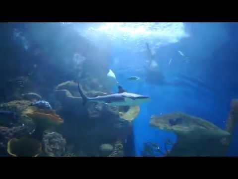 fakieh aquarium @ jeddah saudi arabia