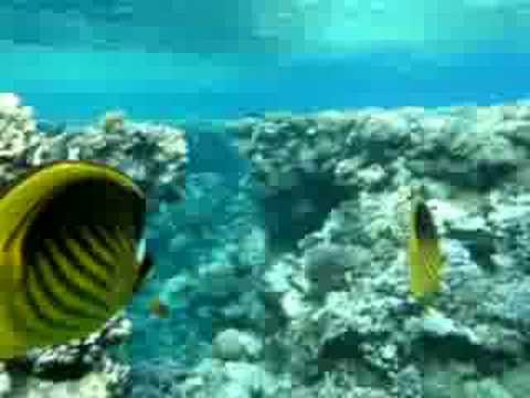 Red sea fish youtube for Red sea fish