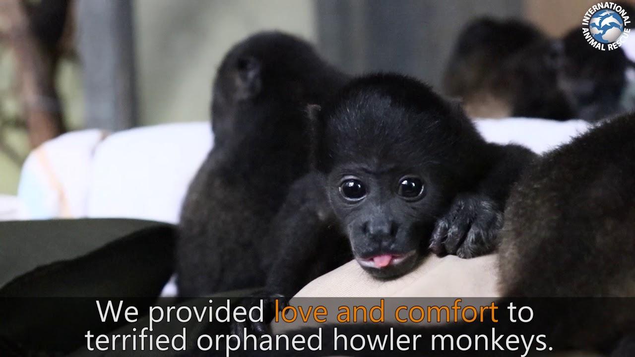 Homepage   International Animal Rescue