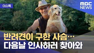 [이슈톡] 반려견이 구한 사슴…다음날 인사하러 찾아와 (2021.06.18/뉴스투데이/MBC)