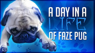 A Day In The Life Of Faze Pug