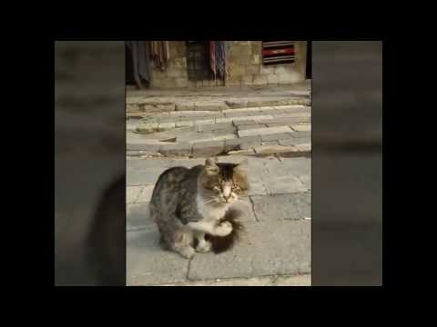 Cats of Tekkieh | National Museum of Damascus