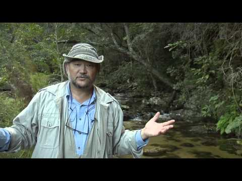 Forest Keep Drylands Working - Short Film by John D. Liu