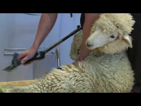 World Champs Machine Shearing Round 1 - Full Coverage