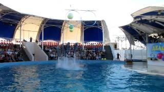 Коктебельский дельфинарий - синхронное плавание