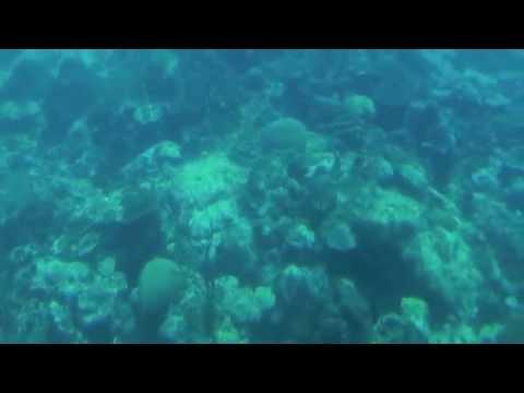 Barbados   Atlantis Submarine Tour