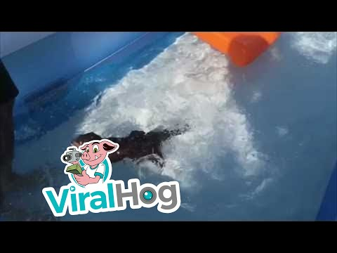 Otterific || ViralHog