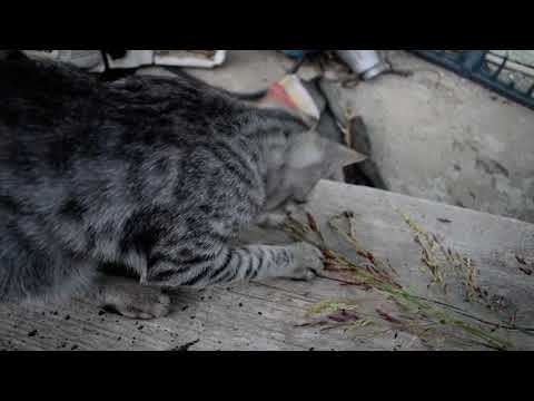 Cute funny cat videos I kittys friends playing with some grass