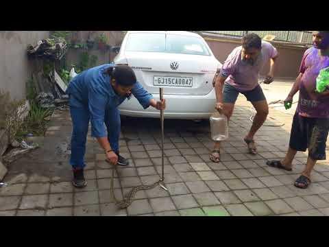 Bhavna patel. india gujrat valsad vapi..24 hrs free seva  snake rescue & injurad animal seva