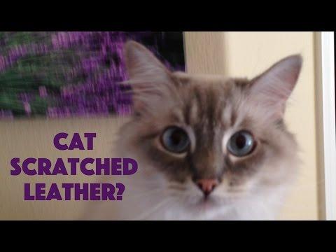 Cat Scratched Leather Sofa Quick Easy Repair Doovi