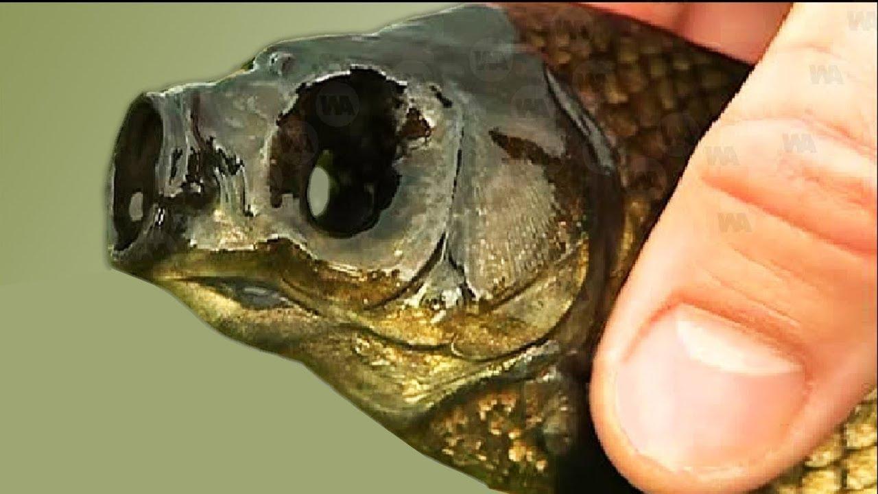 भगवान ऐसी सजा किसी और जानवर को ना दे , मछलियों की ये काबिलियत आप नहीं जानते होंगे