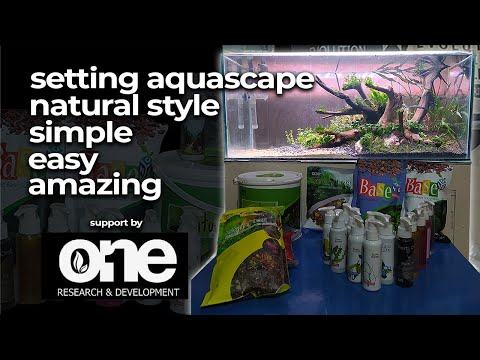 setting-aquascape-simple-natural-style