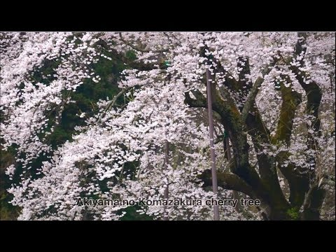 """""""Peace and a smile"""" A glimpse of seasons in Ken-poku District(northern part of Fukushima Prefecture"""