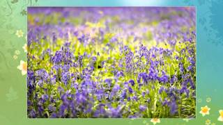 Spring Equinox - Manifest your Dreams with the Spirit of Spring