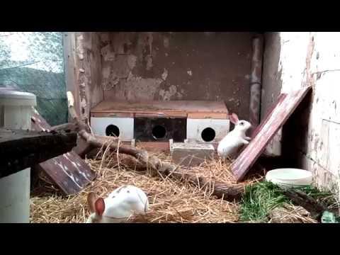 Salma Tavşan Yetiştiriciliği (Tavşan Evi)