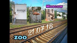 Смотреть видео VLOG Я в МОСКВЕ | Московский зоопарк онлайн