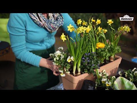 Balkon bepflanzen - Dehner Ratgeber - YouTube