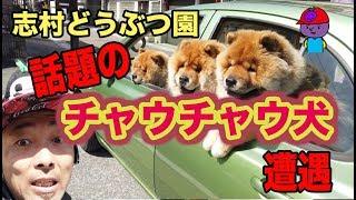 ブドウちゃん運営姫路の種↓ https://budou-chan.jp/ ☆ 姫路の種Twitter↓...