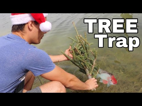 CHRISTMAS Tree FISH TRAP Catches COLORFUL FISH!!