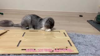 이사기념 캣타워 만들기 !!!