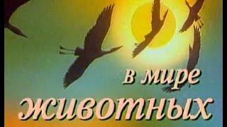 В мире животных с Николаем Дроздовым. Выпуск №40
