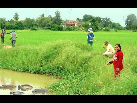 Fishing at Krang Thnong Rice Field - Climbing Perch Cambodia