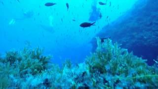 Tauchen Mallorca September 2012, Pto. Andratx, mit Cool Divers