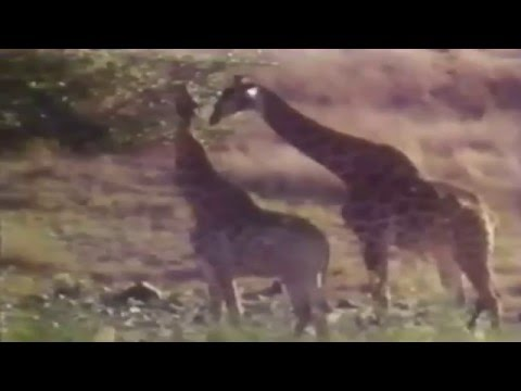 Vangelis - Frederic Rossif Documentary - L'arbre de Vie