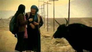 Cattle Women