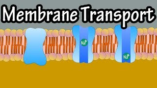 Cell Membrane Transport - Transport Across A Membrane - How Do Things Move Across A Cell Membrane
