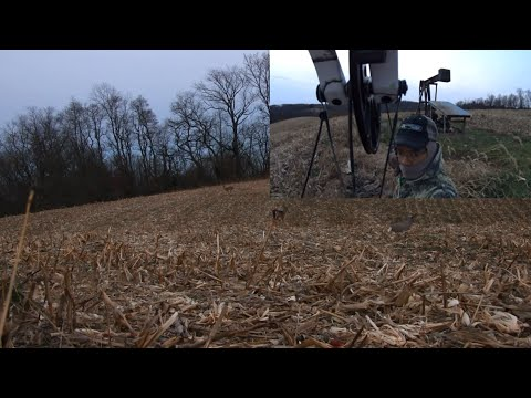 My 2015 Ohio Deer Bow Season The Oil Well Doe by Nito Mortera