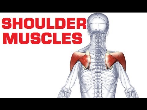 Rotator Cuff Shoulder Muscles Anatomy Youtube