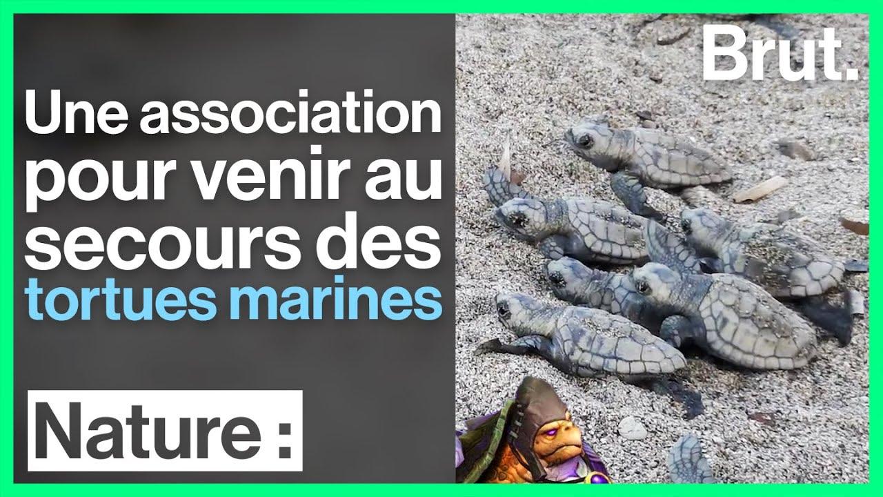 Nouvelle-Calédonie : une association au secours des tortues marines